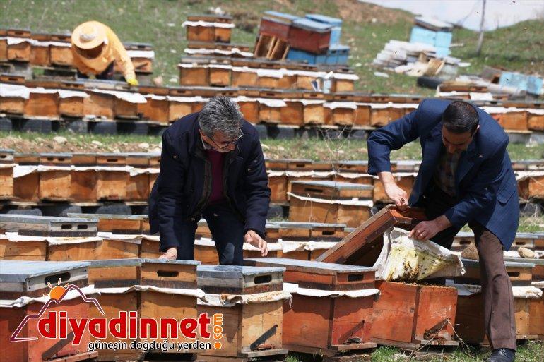 Arıcılar kolları sıvayarak bal üretimi çalışmalarına başladı