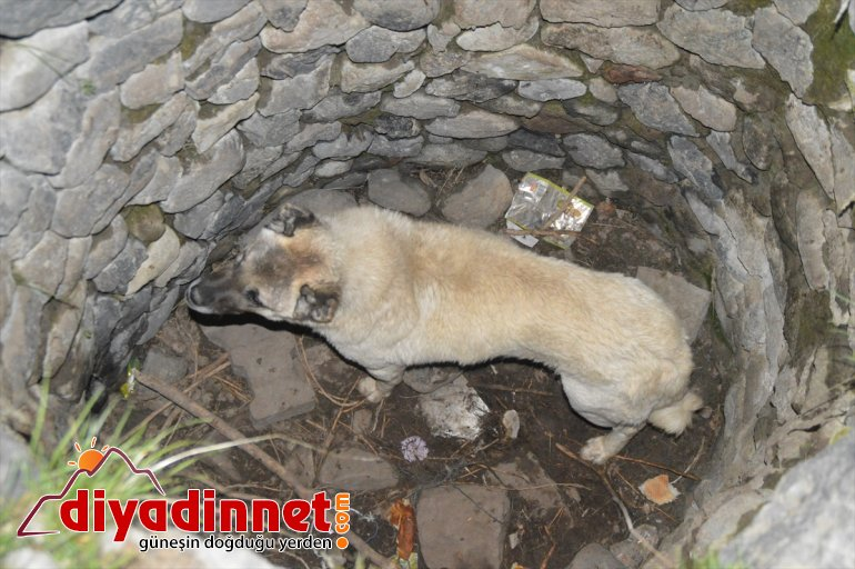 Kuyudan çıkarılan gebe köpek düştüğü bir başka kuyudan da kurtarıldı
