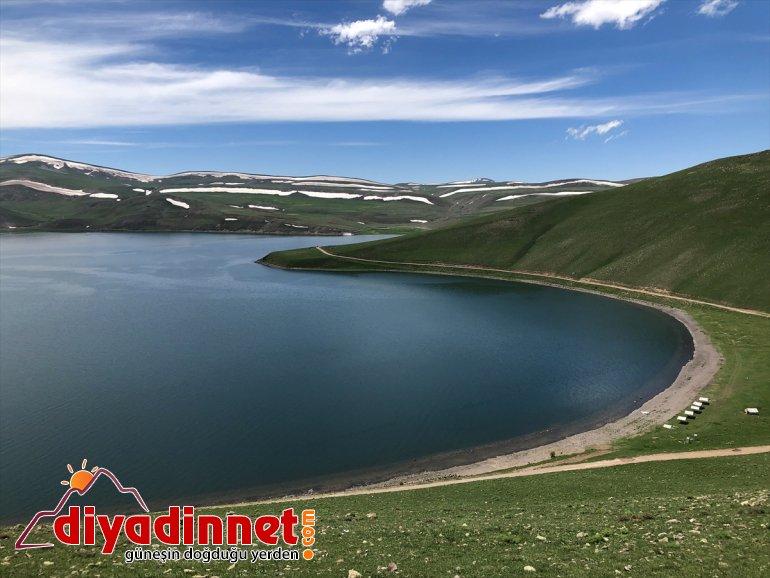 oldu Anadolu'daki - Gölü Doğu yuvası Balık IĞDIR martıların 2