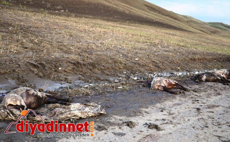 zarar koyun gördüğü selde 100'e köylerin yakın telef oldu Ağrı'da 13