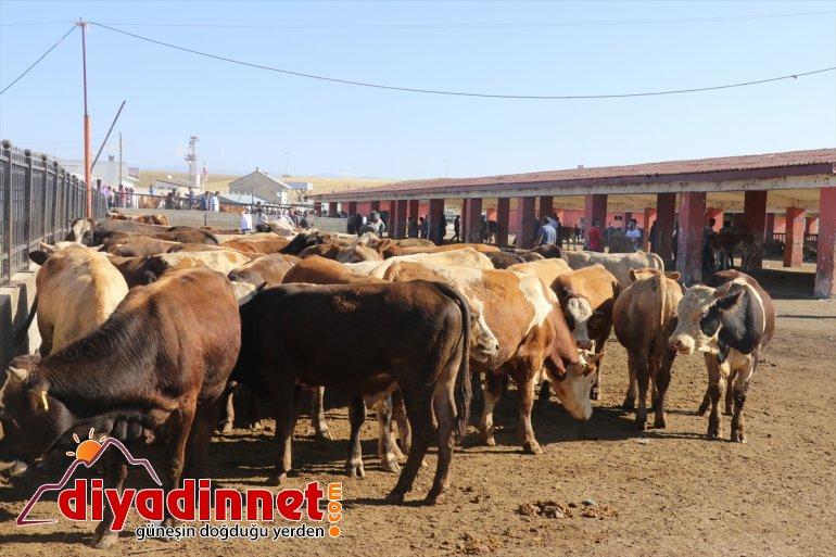pazarlarında arife Doğu Anadolu'daki hareketliliği hayvan 2