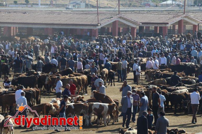 pazarlarında Anadolu'daki hayvan arife Doğu hareketliliği 5