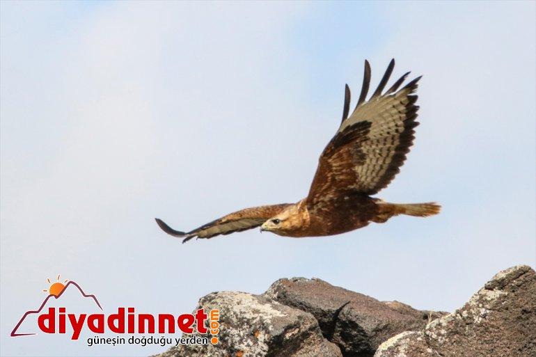 Iğdır cenneti: kuş IĞDIR - Doğu'nun 12