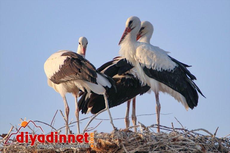 cenneti: - kuş IĞDIR Iğdır Doğu'nun 4