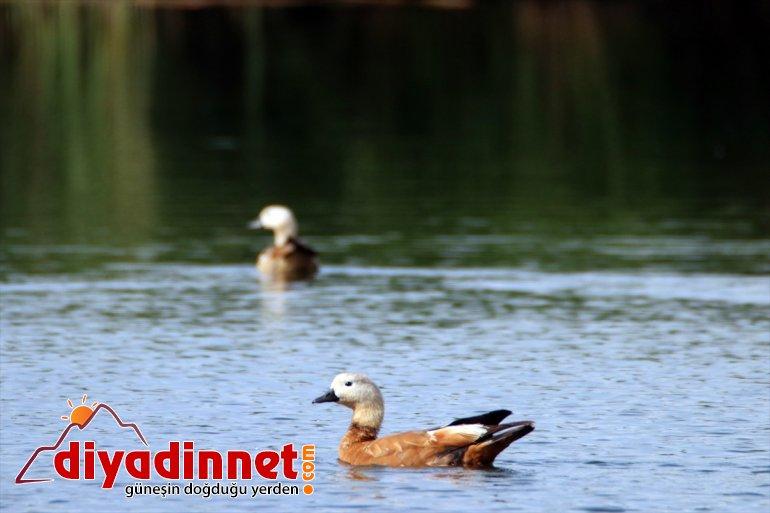 Iğdır - cenneti: IĞDIR Doğu'nun kuş 7