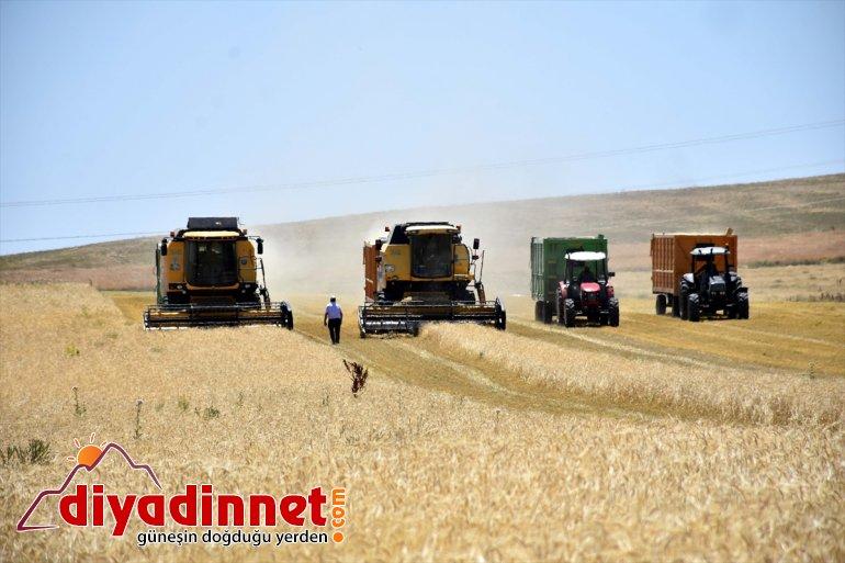 Biçerdöver operatörleri ekmek parası için Muş Ovası'nda ter döküyor