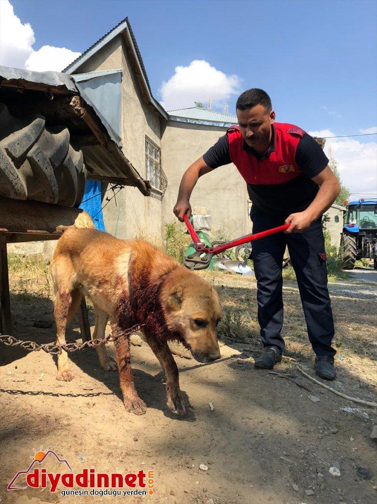 Boynu bağlı olduğu evin önünde zincire sıkışan köpek kurtarıldı
