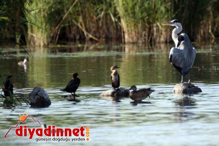 Doğu'nun hazırlığı kuş başladı cennetinde göç 12