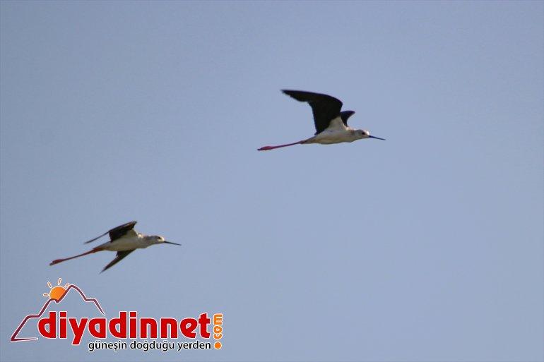 göç kuş cennetinde Doğu'nun başladı hazırlığı 13