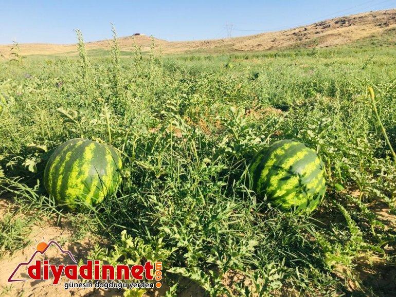 Patnoslu Çiftçi Pandemi sürecini organik ürünlerle uğraşarak geçiriyor