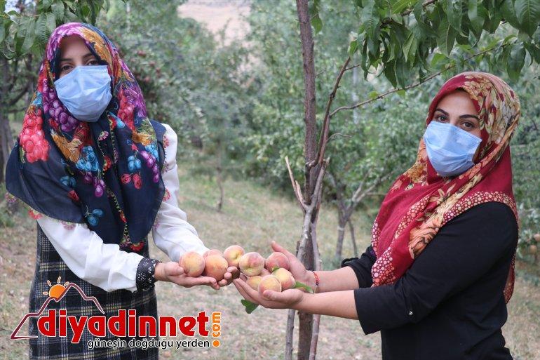 Devlet (Drone bahçesinde baba üretiyor desteğiyle tonlarca meyve yadigarı destekli) çeşitlendirdiği 5