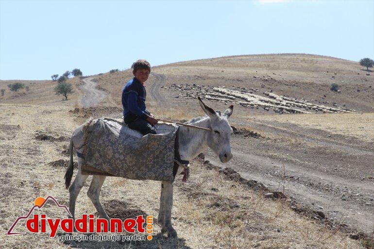 yolunda Doğu Yayla - dönüş mesaisini göçerler tamamlayan Anadolu'daki AĞRI 4