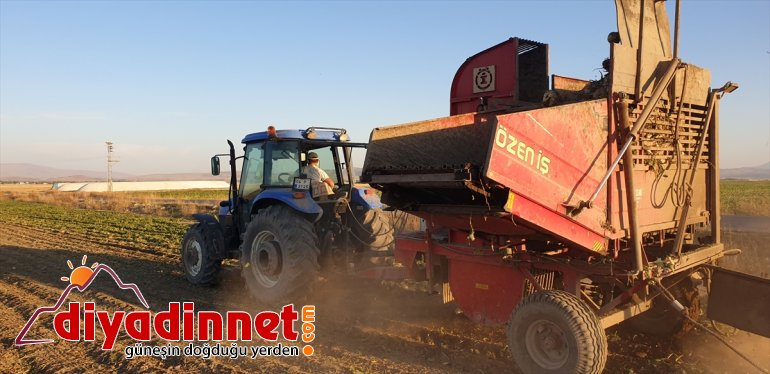 şeker ediyor Ağrı'da devam zorlu hasadı pancarı çiftçilerin 9