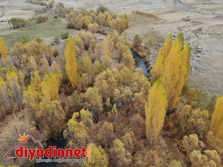 sunuyor cümbüşü şölen doğa oluşan görsel sonbaharla Ağrı'da renk 6