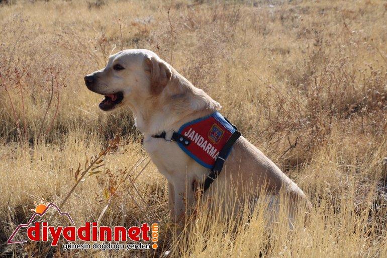 köpeği iz sayesinde bulundu Elazığ'da Dost kadın kaybolan yaşlı 4
