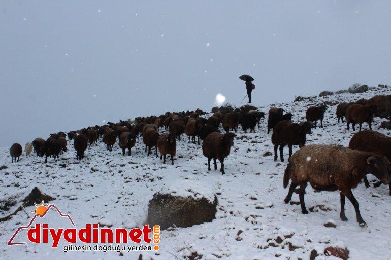 Kar yağışı hayvanlarını otlatan çobanlara zor anlar yaşattı5