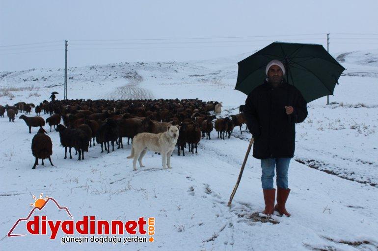 Kar yağışı hayvanlarını otlatan çobanlara zor anlar yaşattı6