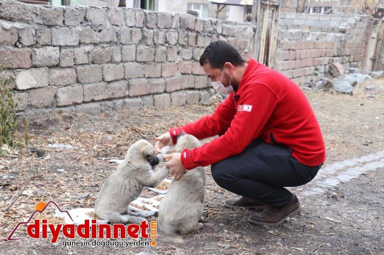 gönüllüleri unutmadı Kovid-19 hayvanlarını AĞRI kısıtlamasında Kızılay - sokak 2