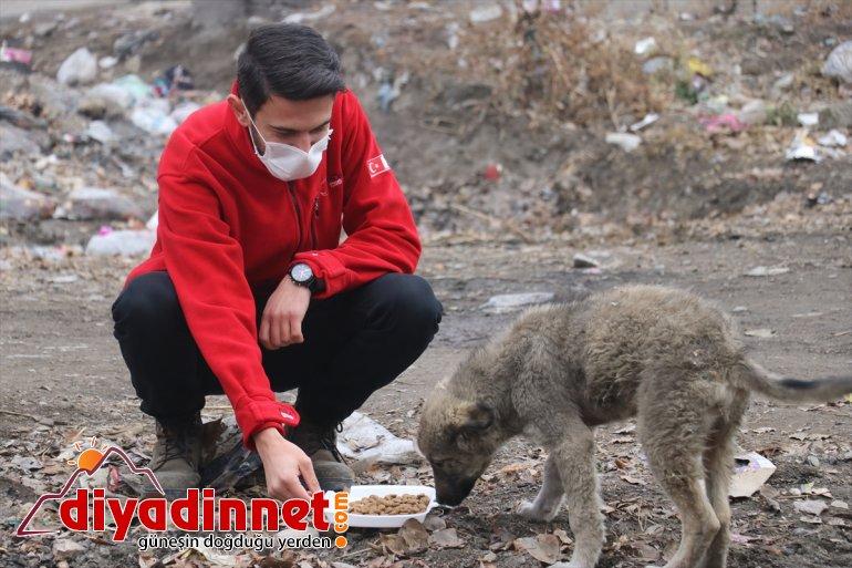 Kızılay gönüllüleri AĞRI kısıtlamasında - sokak unutmadı Kovid-19 hayvanlarını 11