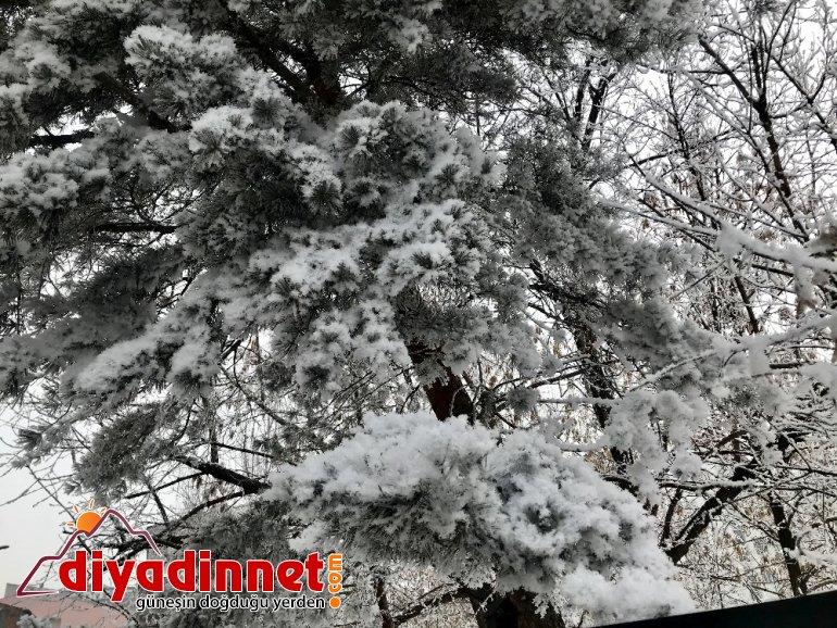Ağaçlardaki kırağı kartpostallık görüntüler oluşturdu2