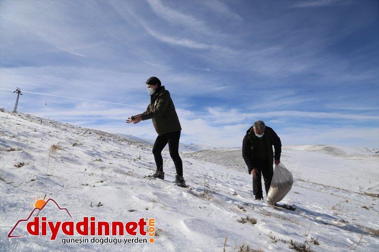 ERZURUM yaban için yapıyor bekçileri Doğanın koruyucu sürdürülebilir görev hayatı - 7