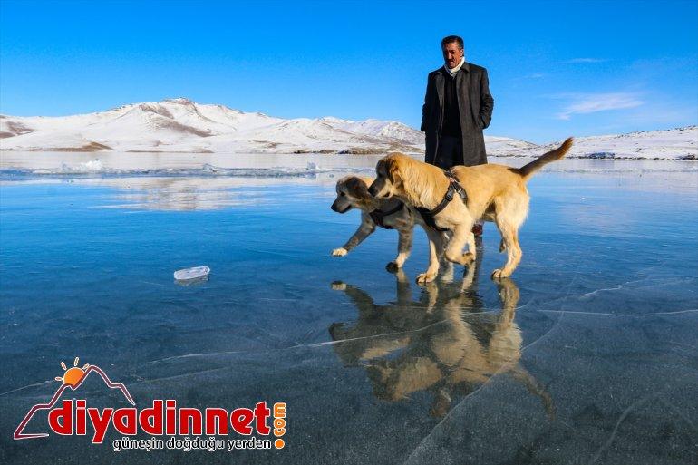 gülümsetti oynayan köpekler - yüzeyinde Balık buzla oyun Gölü'nün izleyenleri kaplı 2