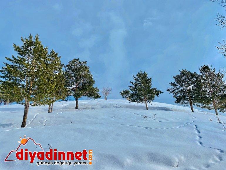 Kış mevsimi Ağrı'yı kartpostala çevirdi