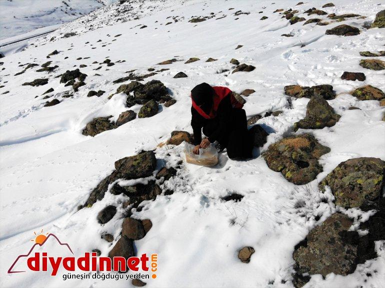 yabani hayvanlar için karlı bırakıldı dağlara Ağrı'da yem 2