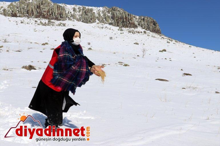 için Ağrı'da bırakıldı yem dağlara karlı hayvanlar yabani 9
