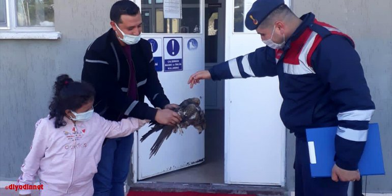 Elazığ'da jandarmanın yol kenarında bulduğu yaralı kartal tedavi altına alındı