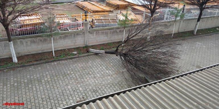 Malatya'da kuvvetli rüzgar nedeniyle ağaç devrildi