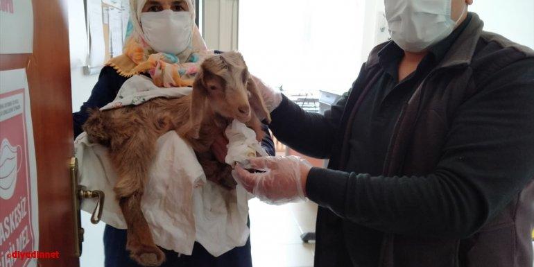 Malatya'da yetiştiricinin yavru keçisi tedavi edildi
