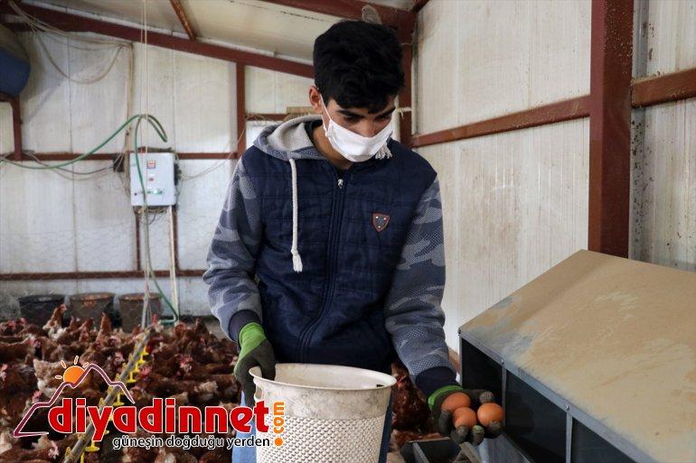 çiftliği tavuk organik yumurta için AĞRI memur, kurdu dönen üretimi Köyüne emekli - 15