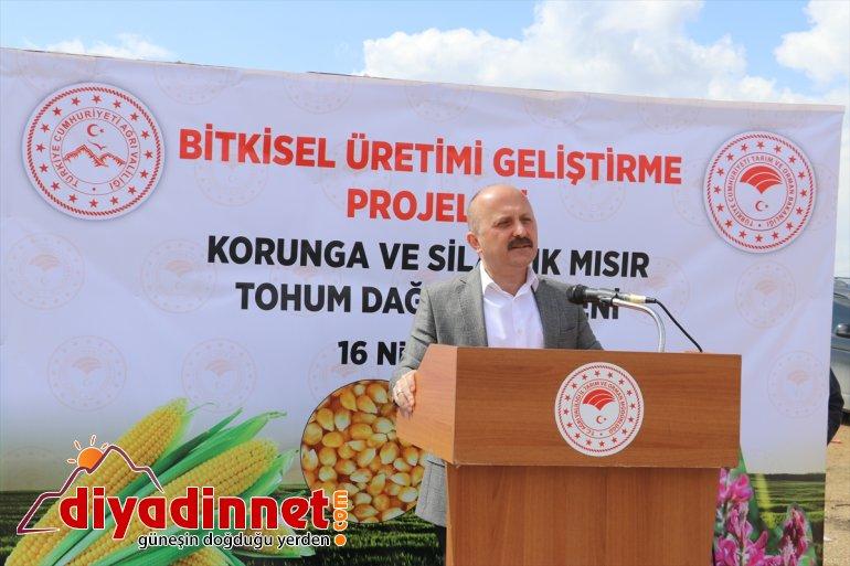 Ağrı'da silajlık mısır ve korunga tohumuyla tarımda verimliliğin artırılması hedefleniyor