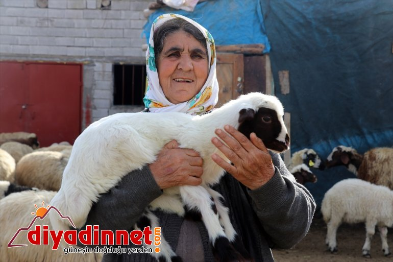 buluşması görüntüler renkli baharın oluşturuyor kuzuların müjdecisi anneleriyle Ağrı'daki köylerde 8