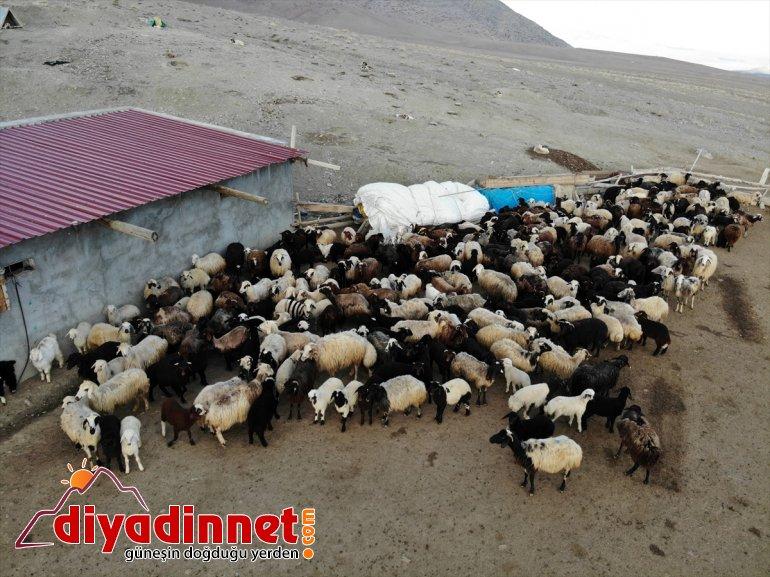 baharın oluşturuyor buluşması köylerde kuzuların müjdecisi Ağrı'daki görüntüler anneleriyle renkli 10