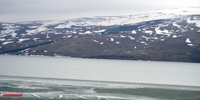 Çıldır Gölü'nü kaplayan buz, bahar mevsimiyle erimeye başladı