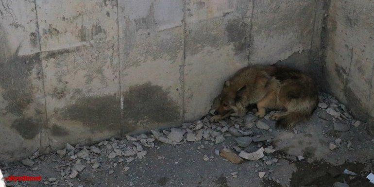 Erzincan'da inşaat çukuruna düşen köpeği itfaiye ekipleri kurtardı