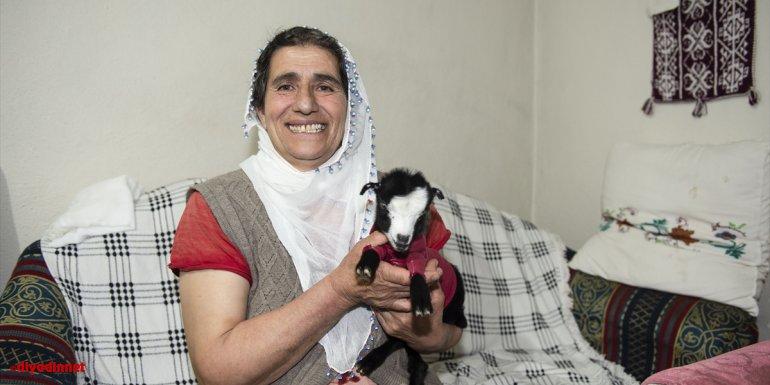 """Annesi terk edince donma tehlikesi geçiren oğlak """"Dina"""" Yarar ailesinin maskotu oldu"""