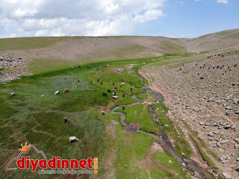 Ağrı'daki Sinek Yaylası göçerlerin sürüleriyle şenlendi