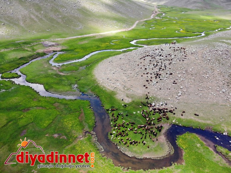 göçerlerin Yaylası Ağrı'daki Sinek sürüleriyle şenlendi 15