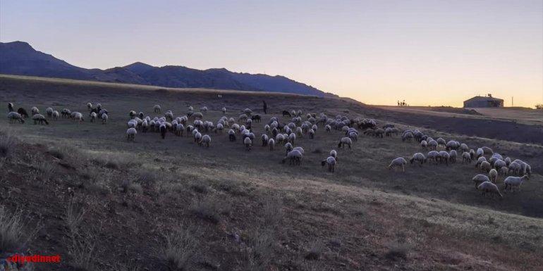 Elazığ'da kaybolan 190 koyun drone ile bulundu