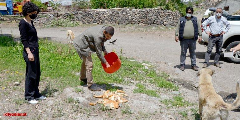 Kars'ta kısıtlama günlerinde sokak hayvanları unutulmadı