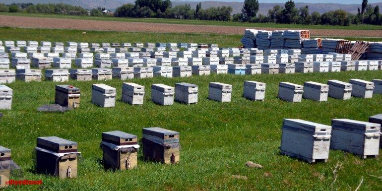 Muş'ta bu yıl 700 ton bal rekoltesi bekleniyor