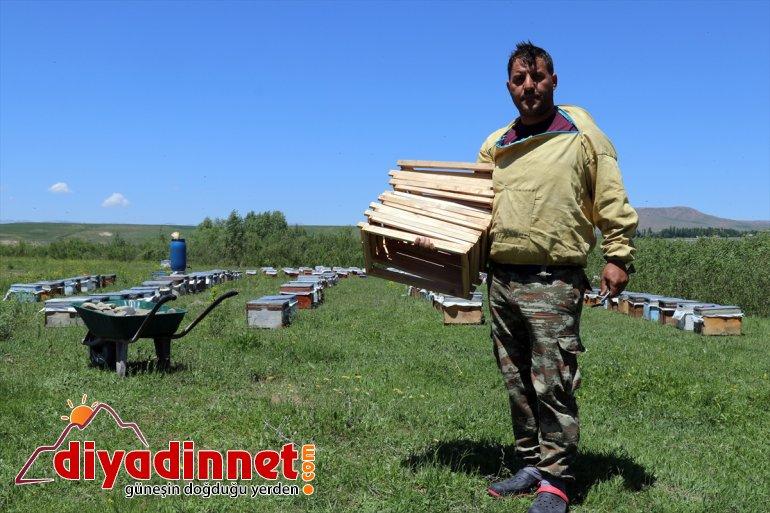 Ağrı yaylalarında Zengin mesaisi bal başladı sahip arıcıların örtüsüne bitki 20
