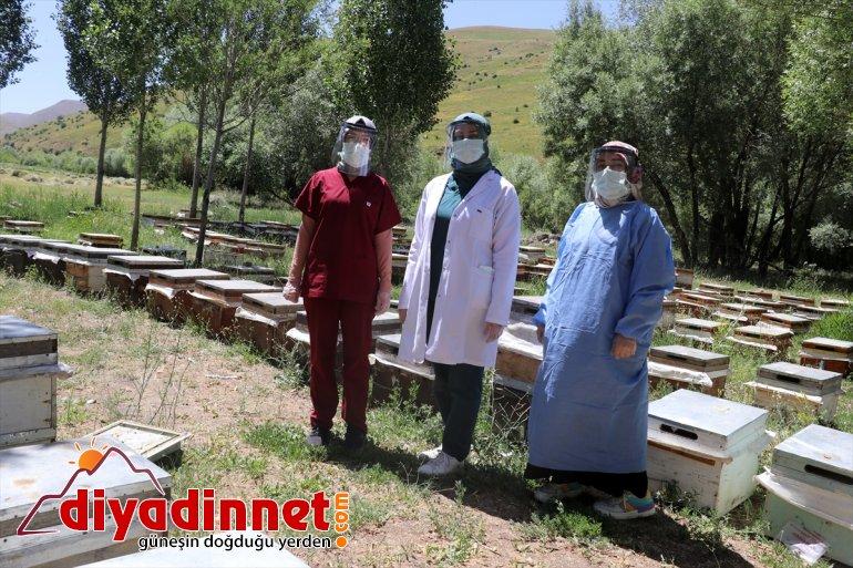 Yaylalarda sunuluyor da olan - hizmeti mesaide aşı AĞRI arıcılara 'ballı' 17