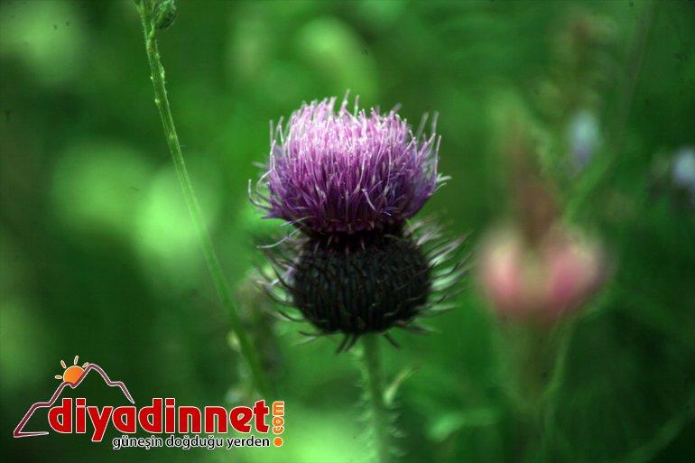 renk fotoğraf çekiyor cümbüşü ilgisini Ağrı'da oluşturan tutkunlarının doğada çiçekler 10