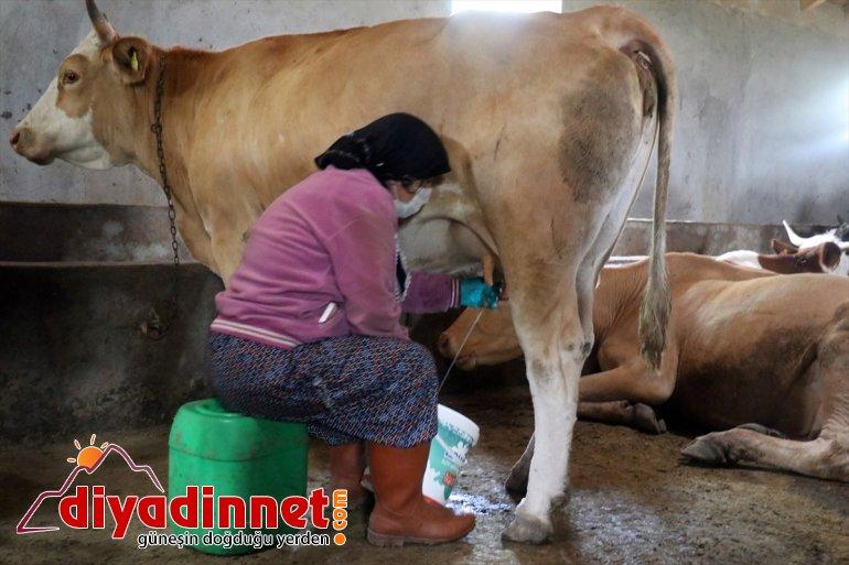 Ağrılı kadınlar kış kahvaltılarının vazgeçilmezi çeçil peynirinin üretimi için zorlu mesaide3