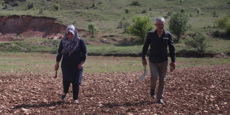 ÜRETİMDEN İHRACATA TARIM - Köyünde hem kanserle savaşını kazandı hem de üretici oldu