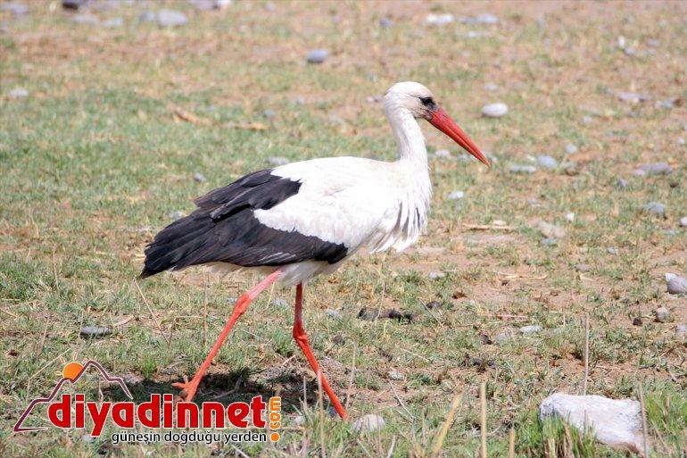 Kuşlar renk Dağı Parkı'na katıyor Milli Ağrı 5